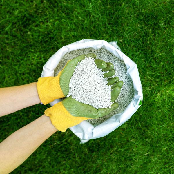 Dünger für Rasen online bestellen